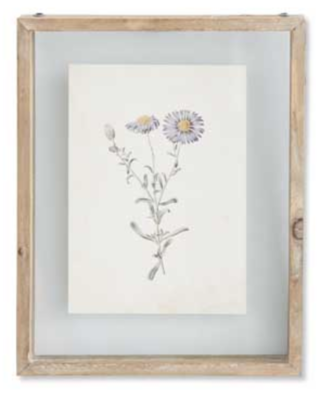 10 inch botanical print in shadow box F