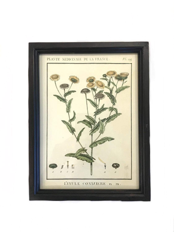 Leafy botanical print F