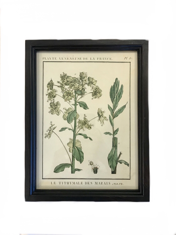 Leafy botanical print B