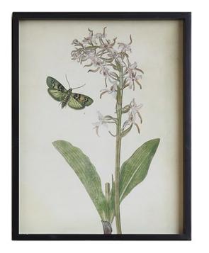 Butterfly wall decor B 23 inch