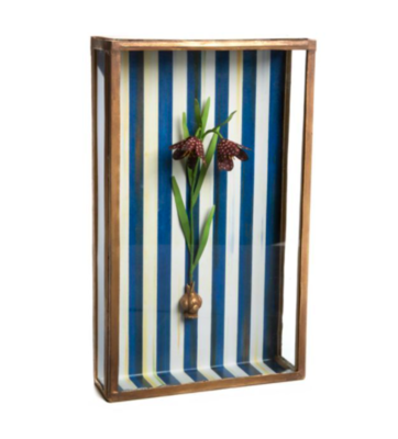 Fritillaria shadow box
