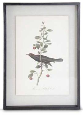 Black wood framed black bird print