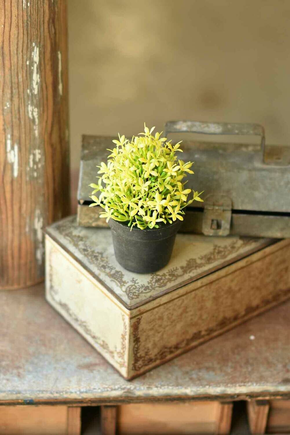 "5.75"" Meadow Glade Pot Yellow"