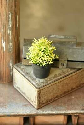 """5.75"""" Meadow Glade Pot Yellow"""