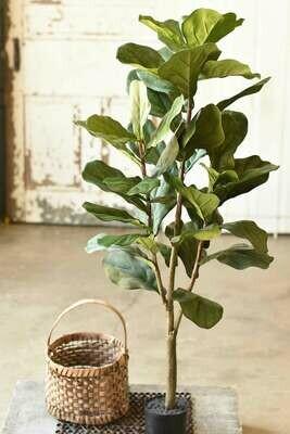 4' Fiddleleaf Fig Tree