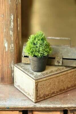 "5.5"" Greenpoint Pot No.2"