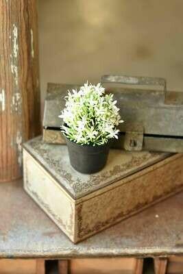 """5.75"""" Meadow Glade Pot White"""