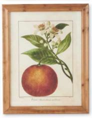 Botanical Fruit Print D