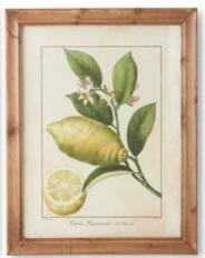 Botanical Fruit Print E