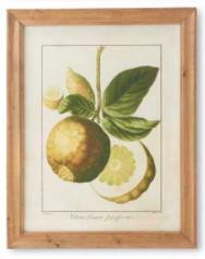Botanical Fruit Print B