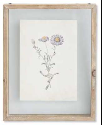 Botanical Print Style B in Shadow Box