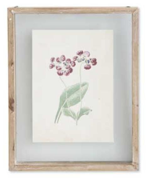 Botanical Print Style C in Shadow Box