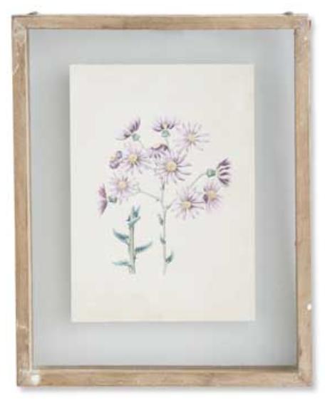 Botanical Print Style F in Shadow Box