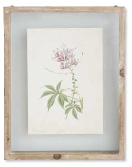 Botanical Print Style D in Shadow Box