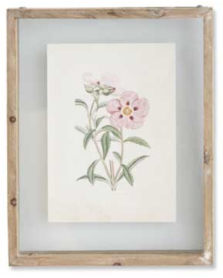 Botanical Print Style E in Shadow Box