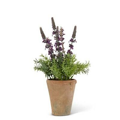 """12.5"""" Purple Lavender in Clay Pot"""
