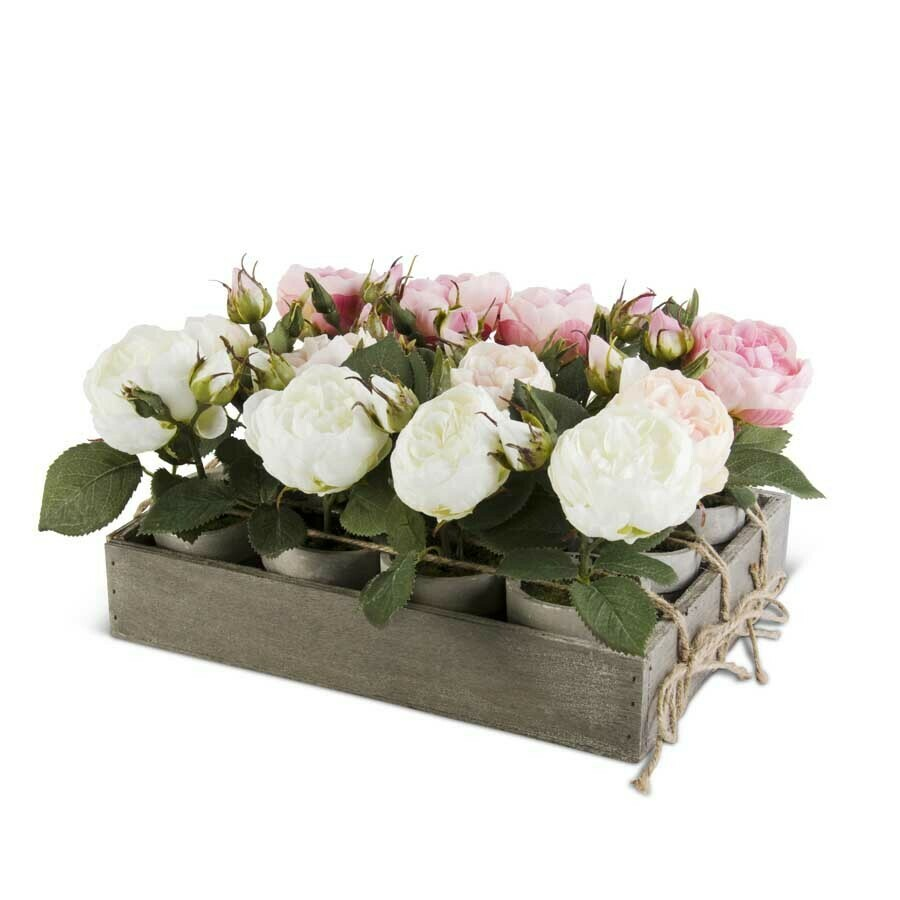Potted Rose Pale Pink