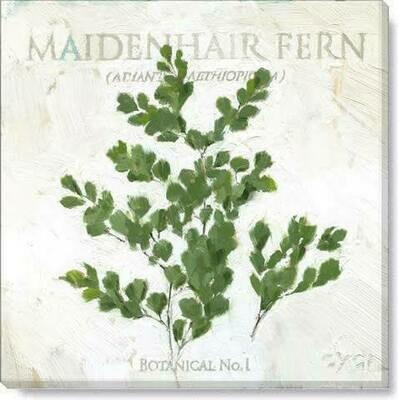 Maidenhair Fern Giclee Wall Art