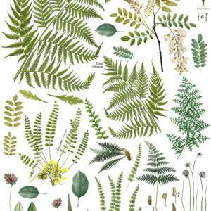 Frond Botanical  ~  IOD Image Transfer -  24X33