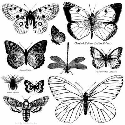 Butterflies ~ IOD Décor Stamp 12x12