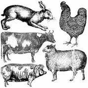 Farm Animals ~ IOD Decor Stamp -