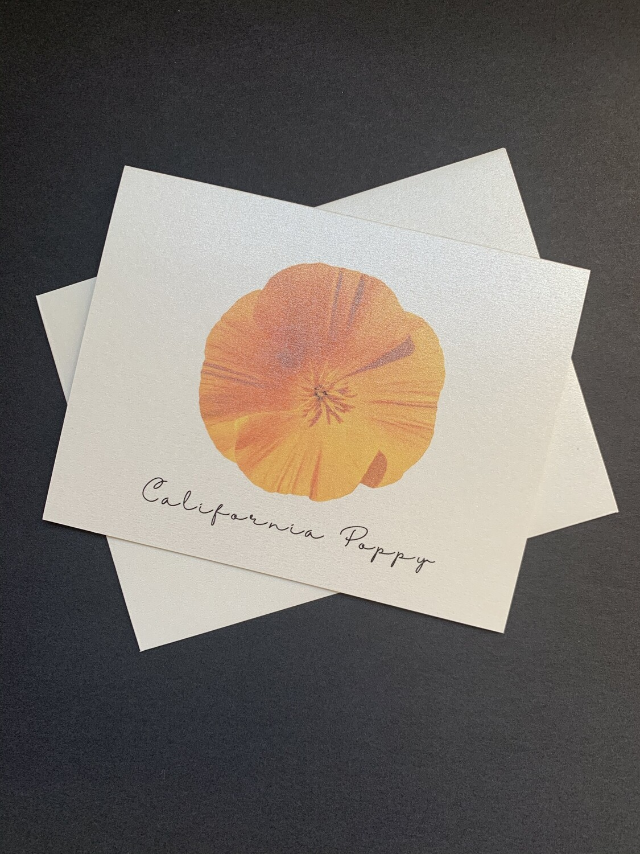 California Poppy Postcard (D)