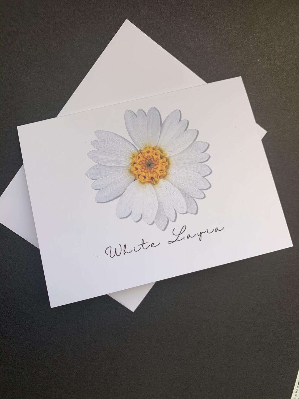 White Layia Postcard