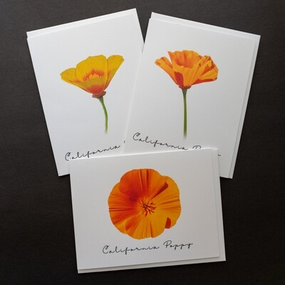 Set of 3 Ca Poppy Wildflowers Postcards