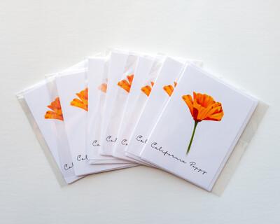 California Poppy Postcard Style C