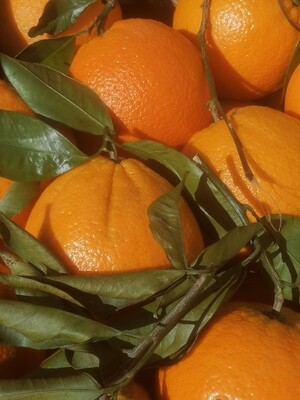 Oranges feuilles