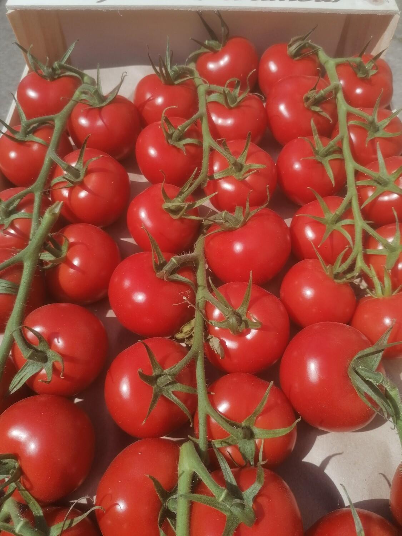 "Tomates ""gustative"""