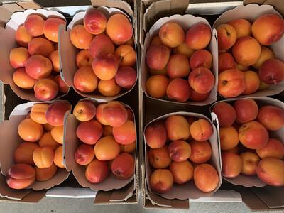 Abricots Extra