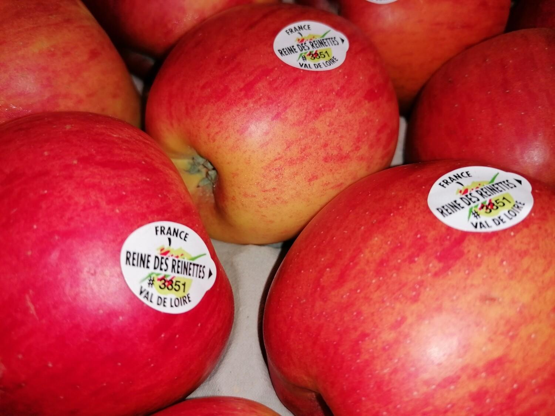 """Pommes  """"Reine des reinettes"""""""