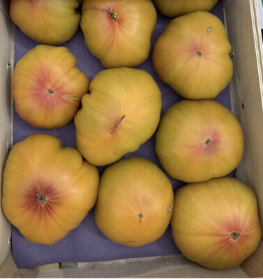 """Tomates """"Ananas"""" pleine terre BIO"""