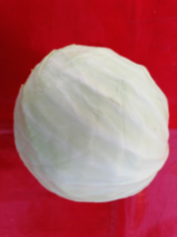 Choux blanc
