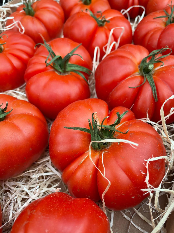 """Tomates """"Rebellion"""""""