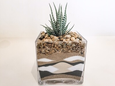 CP002 Small Layered Sand Succulent