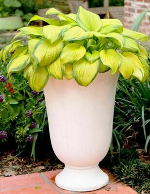 AE043A Small White Urn