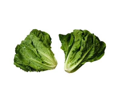 Romaine Field Lettuce