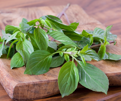 Herb / Basil / Dill
