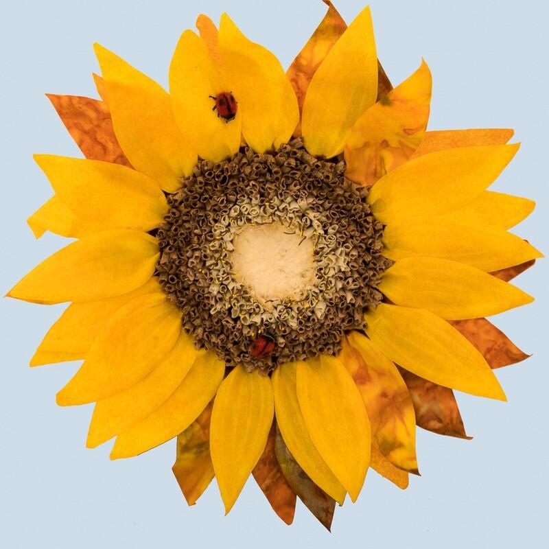 Sunflower and Ladybugs