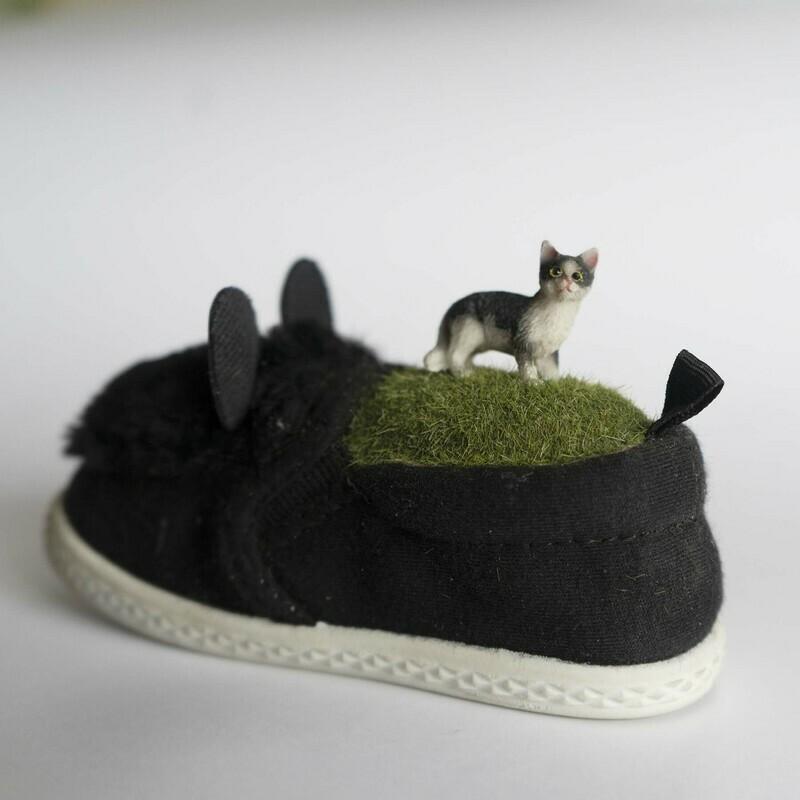 Cat in Cat Shoe