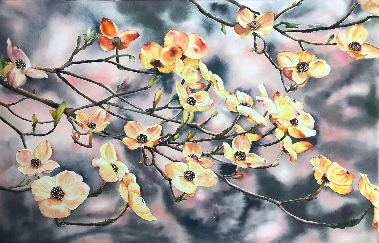 Dogwood blooms