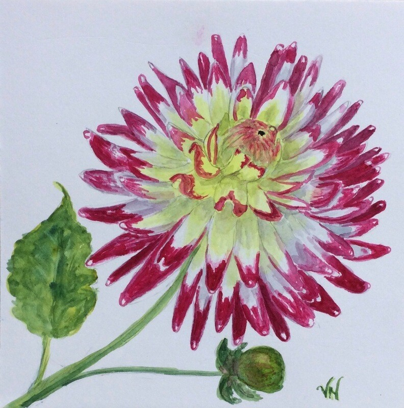 Red-tipped Dahlia