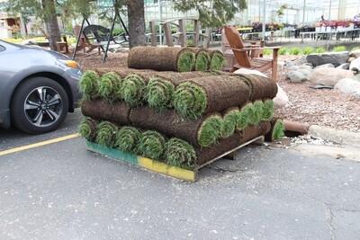 1 Roll Sod (6ft long)