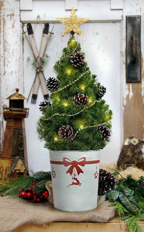 Christmas Tree Live - Table Top 22