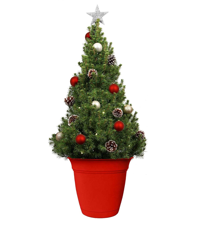 Christmas Tree Live - 40