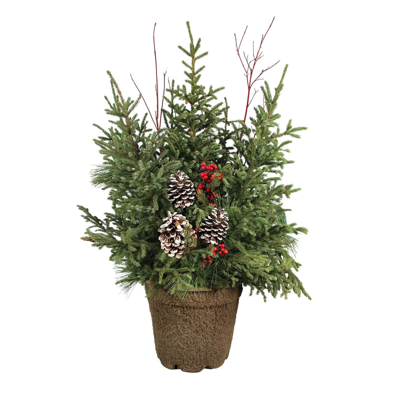 Spruce Tip Pot-12