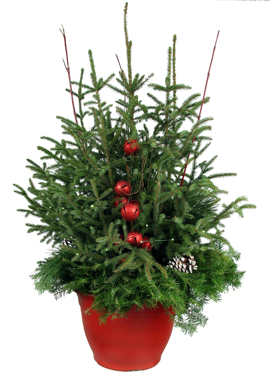 Spruce Tip Pot-Premium Red