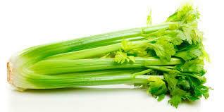 Celery 1 Bunch